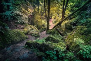 23_WD_03_Kurt Bayerl_Wald03_preview