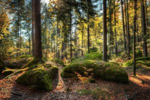 26_WD_01_Kurt Bayerl_Wald01_preview