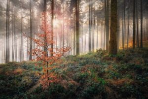 26_WD_04_Kurt Bayerl_Wald04_preview
