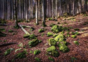 28_WD_02_Kurt Bayerl_Wald02_preview-1