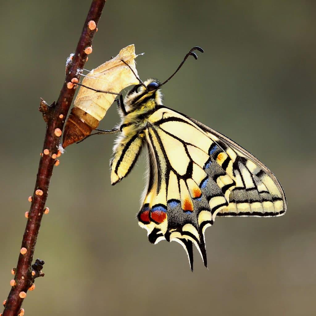 Kollektion 2-Schmetterlinge-Bild 1-1