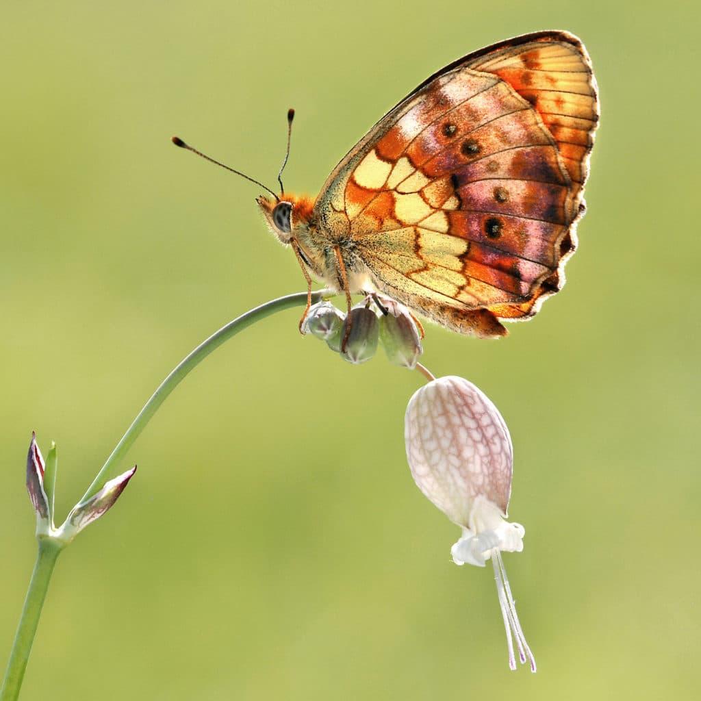 Kollektion 2-Schmetterlinge-Bild 3-1
